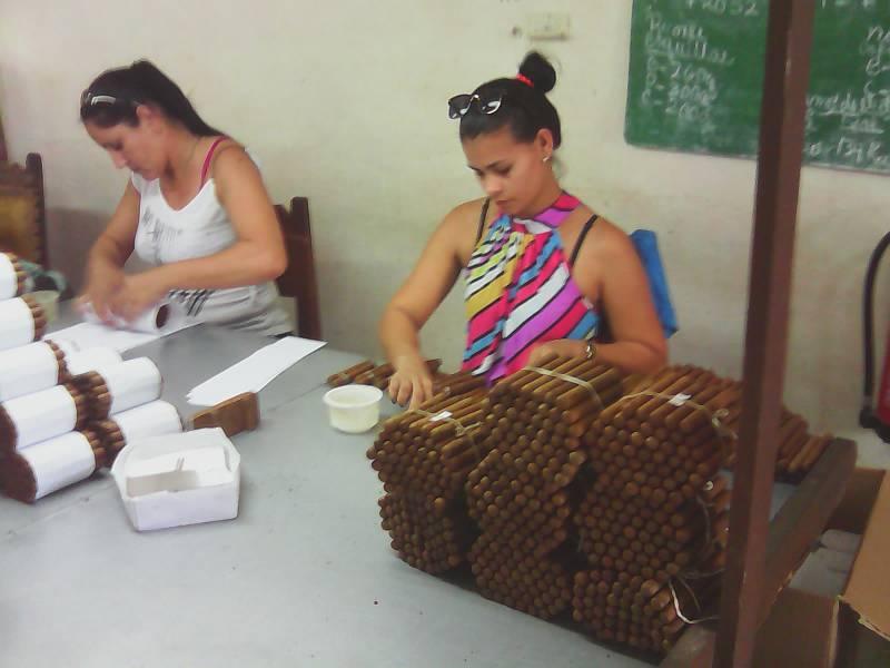 Reto productivo millonario para tabaqueros de San Agustín de Aguarás - Radio Juvenil